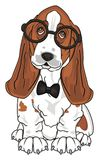 Dog in glasses with a bow Royalty Free Stock Photography