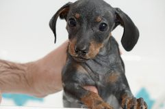 Puppy bath Royalty Free Stock Images