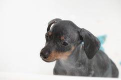 Puppy bath Stock Photos