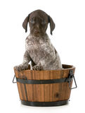 Puppy bath royalty free stock photography