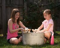 Puppy Bath. Two girls washing pet Pomeranian puppies outside in an old tin washtub Stock Photography