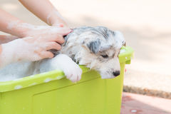 Puppy bathing Royalty Free Stock Photos