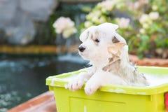 Puppy bathing Stock Image