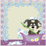 Puppy in the bathroom. Frame:Puppy in the bathroom with brush to the teeth Royalty Free Stock Photos