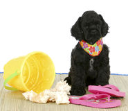 Puppy at the beach Royalty Free Stock Photography