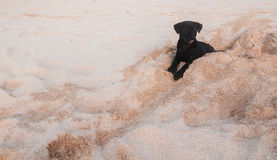 Puppy on a beach Stock Photography