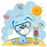 Puppy on the beach. Greeting card Cute Puppy in glasses on the beach Royalty Free Stock Photography