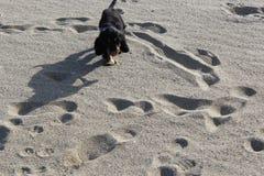 Puppy on beach stock image