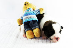 Puppy and bear. In the house of thailand Royalty Free Stock Image