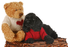 Puppy with bear Stock Photos