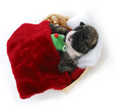 Puppy bedtime Royalty Free Stock Photo