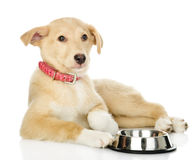 Puppy begging for food. looking at camera Royalty Free Stock Images