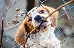 Puppy  behind a  fence. Stock Images