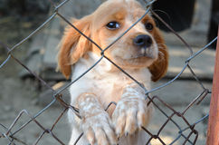 Puppy  behind a  fence. Royalty Free Stock Image
