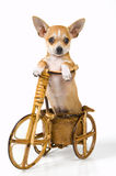 The puppy on a bicycle Royalty Free Stock Photography