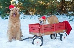 Puppy bij Kerstmis Stock Afbeeldingen