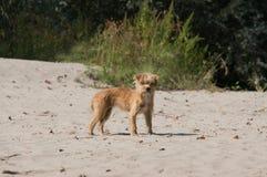 Puppy bij Strand Royalty-vrije Stock Afbeelding