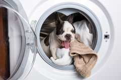 Puppy binnen de wasmachine stock foto's
