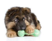 Puppy bites a toy. Royalty Free Stock Image
