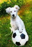 Puppy with black and white ball Stock Images