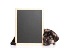 Puppy with blackboard. Cute puppy of 1,5 months old with a blackboard over white background Stock Image