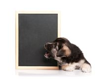 Puppy with blackboard Stock Photos