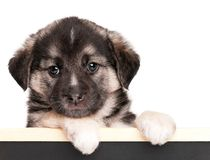 Puppy with blackboard Royalty Free Stock Photography
