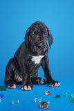 Puppy on the blue Royalty Free Stock Photos