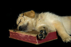 Puppy on book Royalty Free Stock Photo