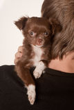 Puppy and boss Royalty Free Stock Photos