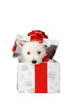 Puppy in box Royalty Free Stock Image