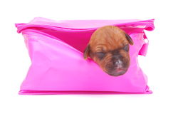Puppy in a box Royalty Free Stock Image