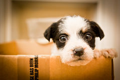 Puppy in a box. This puppy arrived to a dog pound in this box Stock Images