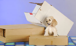 Puppy with boxes Royalty Free Stock Photos