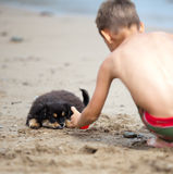 Puppy and boy Royalty Free Stock Image