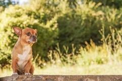 Puppy on bricks wall Royalty Free Stock Photography