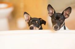 Puppy buiten ton Stock Foto
