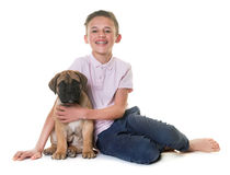 Puppy bull mastiff and child Royalty Free Stock Photo