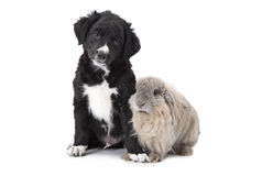 Puppy and bunny in front of white background Stock Photography
