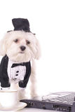 Puppy business Royalty Free Stock Images
