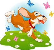 Puppy and butterflies Royalty Free Stock Photo