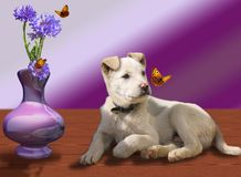 Puppy and butterfly Royalty Free Stock Photo