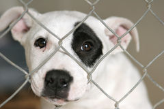 Puppy in a cage. Homeless animals series. White and black mixbreed pup looking out through the wire mesh of his cage royalty free stock photography