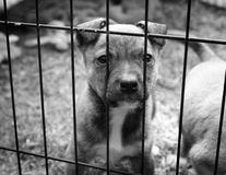 Puppy in a cage. Sad little puppy with his paws up looking out of the bars of his cage. Black and white image royalty free stock photo