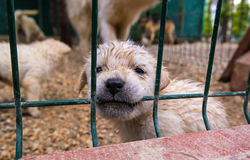 Puppy in a cage. Royalty Free Stock Image