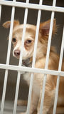 Puppy in a cage Stock Images