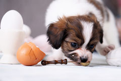 Puppy with a cake stock photo