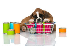 Puppy with canned food Stock Photo