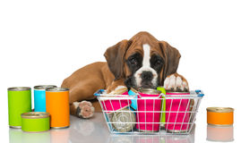 Puppy with canned food Royalty Free Stock Image