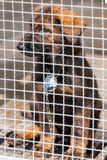 Puppy in captivity Royalty Free Stock Image